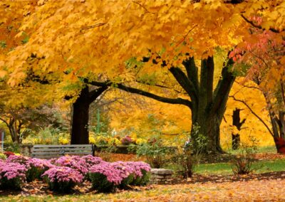 Fall Pruned Trees